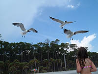 laughing gulls and child
