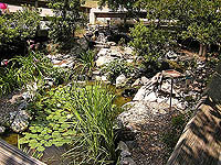 nature center water garden