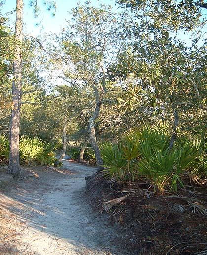 marsh boardwalk trail