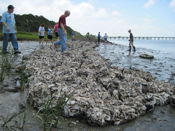 2010 oyster reef bags
