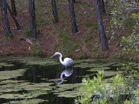 do you want to know an egret