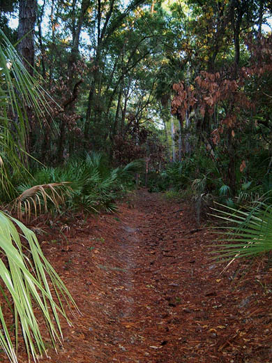 trail with dead red bays