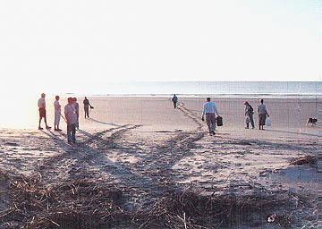 Nest #2 Beach