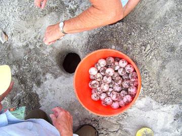 Nest #11 Eggs in Bucket