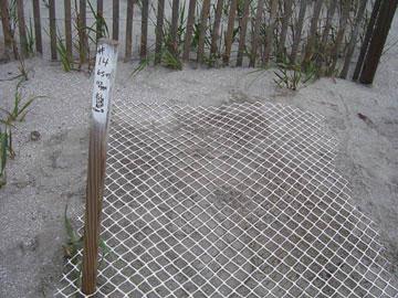 Nest #14 Settled & Marked