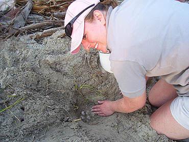Nest #16 Eggs Found