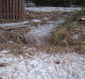 Nest #16 Body Pit