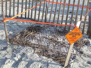 Nest #17 Finished