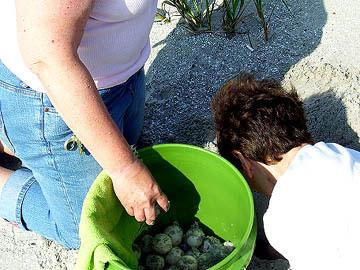 Nest #22 Eggs Into the Bucket