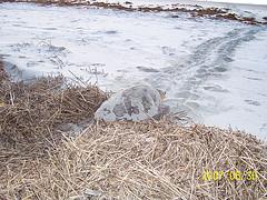 Nest #36 Across the Wrack