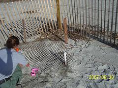 Nest #37 A Safe Spot