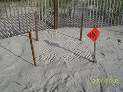 Nest #44 Near the Sand Fence