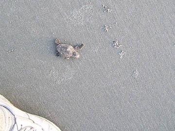 turtlet photo