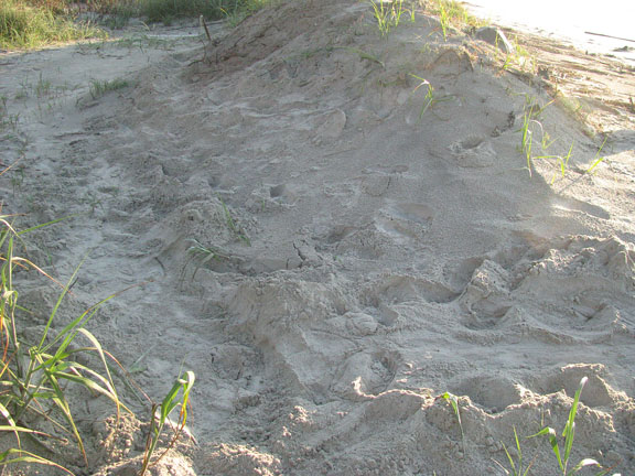 around and over dune