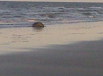 turtle on the beach